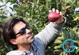 Apple Picking in Warwick, NY